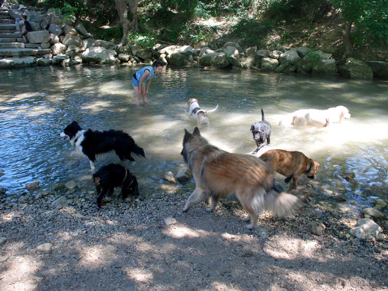 Dogspirit - Balade éducative - Cours collectif - 22 juin 2013