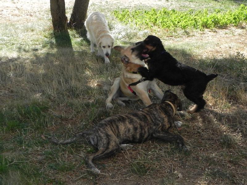 Dogspirit - Balade éducative - Cours collectif - 21 septembre 2013