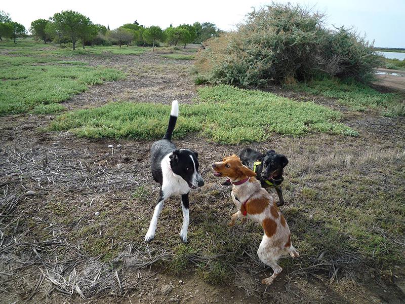 Dogspirit - Balade Educative - 2014-20-09