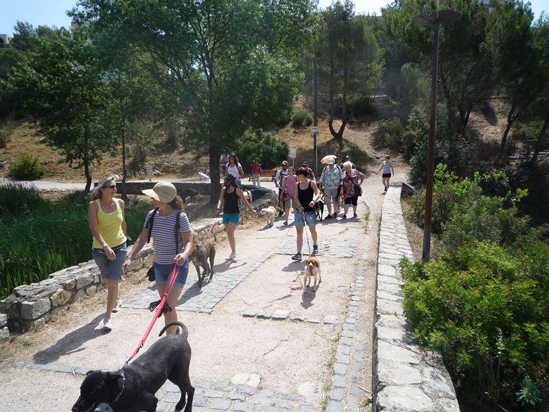 Dogspirit - Balade Educative - 2014-22-06