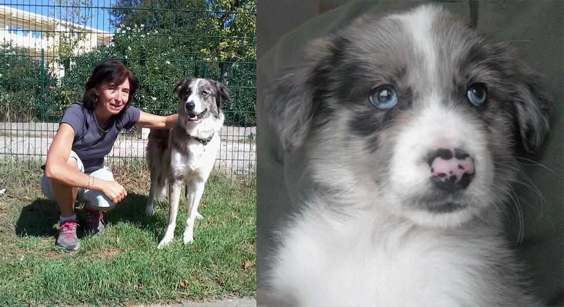 Dogspirit - Livre d'or - Apprentissage canin positif