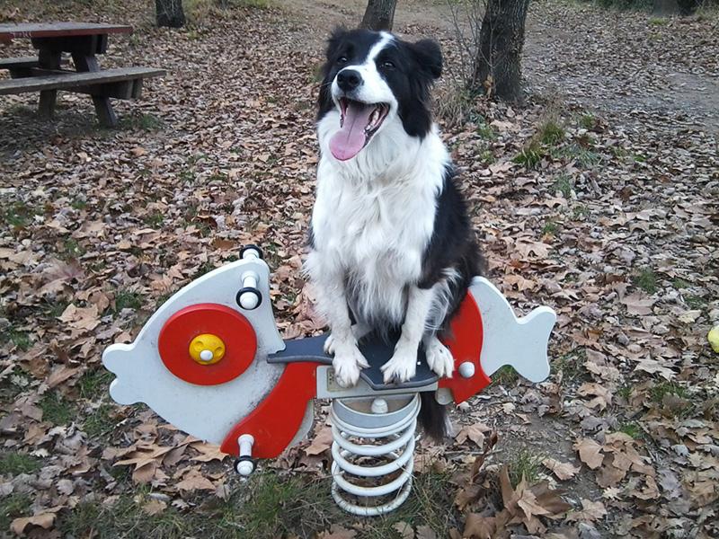 dogspirit_livre_d_or_education_canine_ludique_jeux