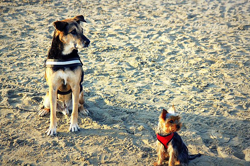 Dogspirit - Livre d'or - Même pas peur !