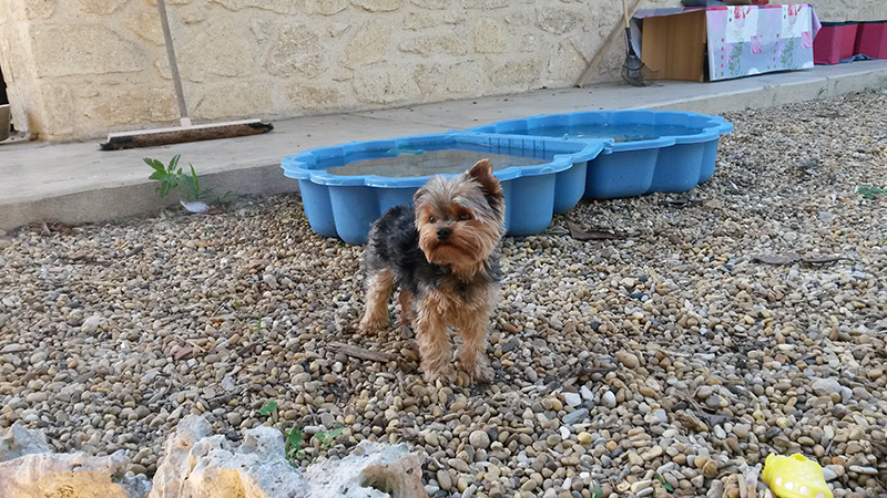 dogspirit_livre_d_or_pension_canine_en_famille