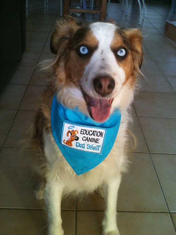 dogspirit_livre_d_or_pension_chien_accueillante_rassurante