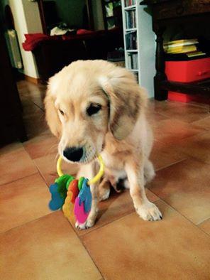 dogspirit_livre_d_or_pension_chien_joie_de_vivre