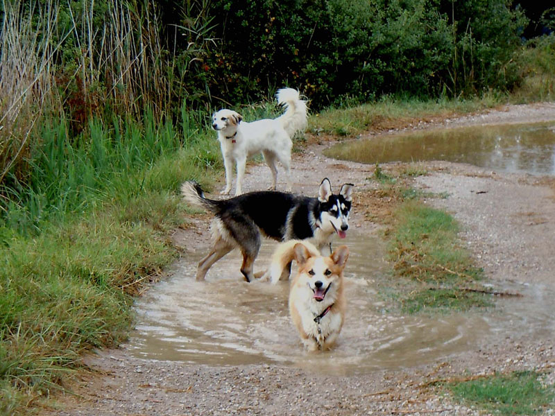 dogspirit_livre_d_or_pension_chiens_promenades_en_groupe_sociabilisation