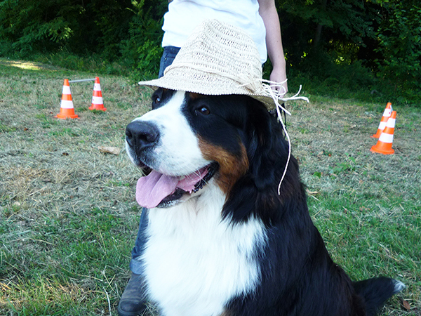 Dogspirit - Des méthodes de dressage amicales et positives