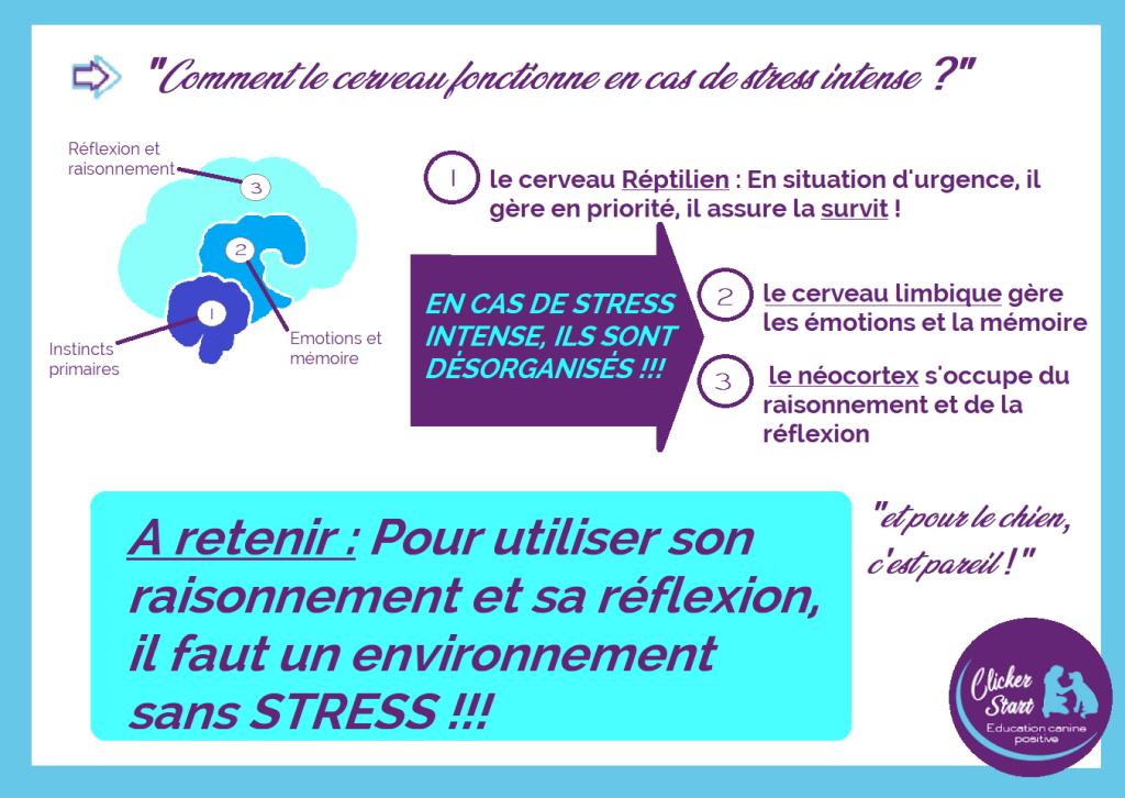 cerveau et stress 1