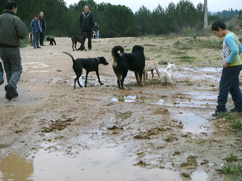 Dogspirit - Balade éducative - Cours collectif - 12 novembre 2011
