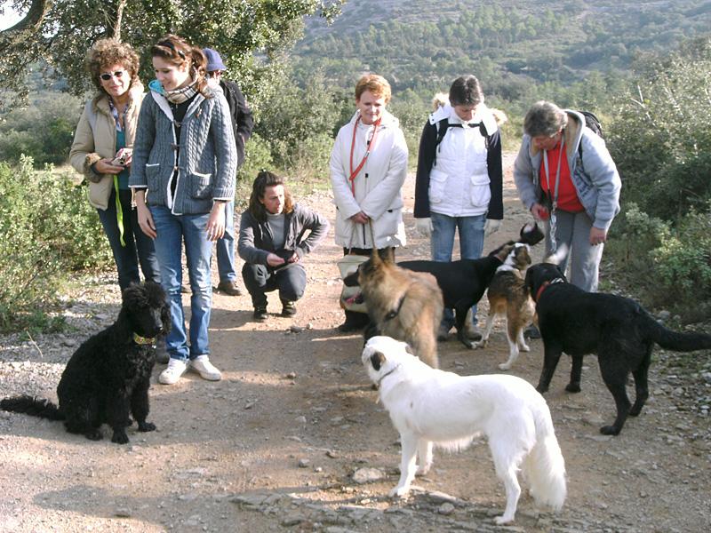 Dogspirit - Balade éducative - Cours collectif - 11 décembre 2011