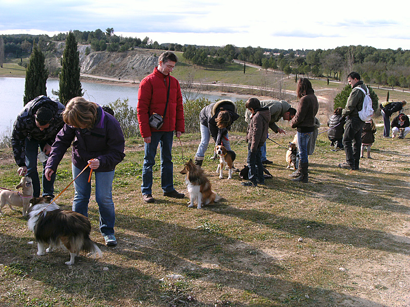 Dogspirit - Balade éducative - Cours collectif - 29 janvier 2012