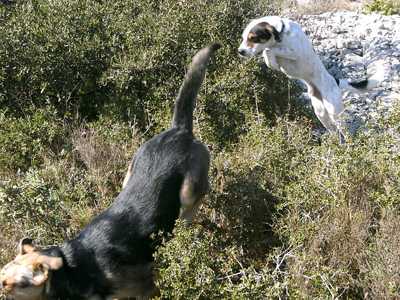 Dogspirit - Balade éducative - Cours collectif - 19 février 2012