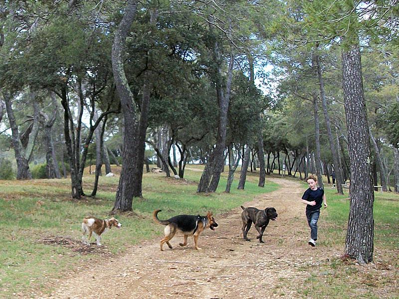 Dogspirit - Balade éducative - Cours collectif - 29 avril 2012