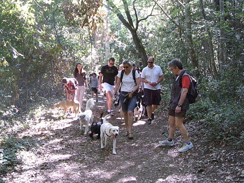 Dogspirit - Balade éducative - Cours collectif - 9 juin 2012
