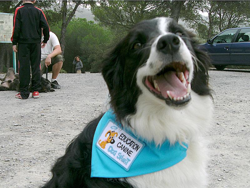 Dogspirit - Balade éducative - Cours collectif - 23 septembre 2012