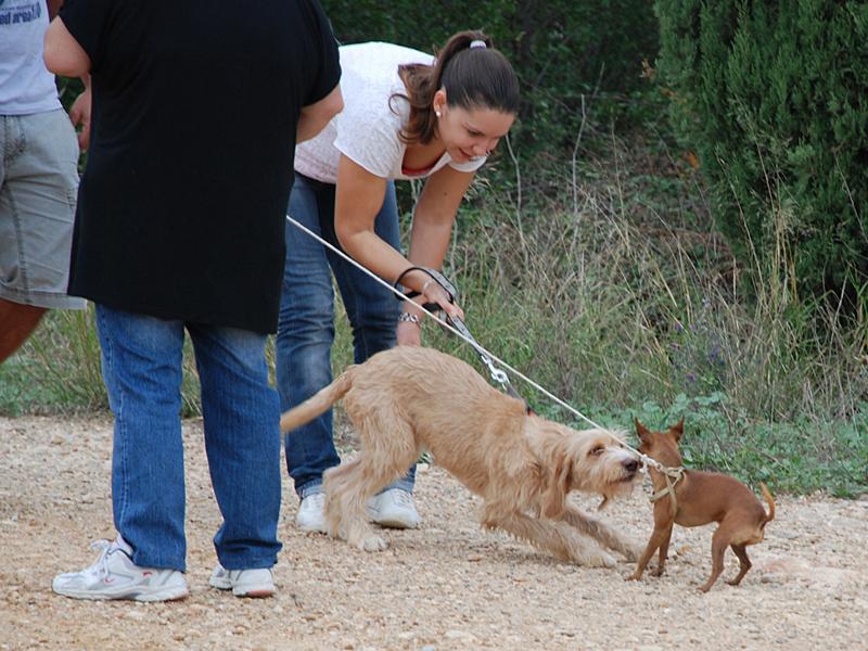Dogspirit - Balade éducative - Cours collectif - 7 octobre 2012