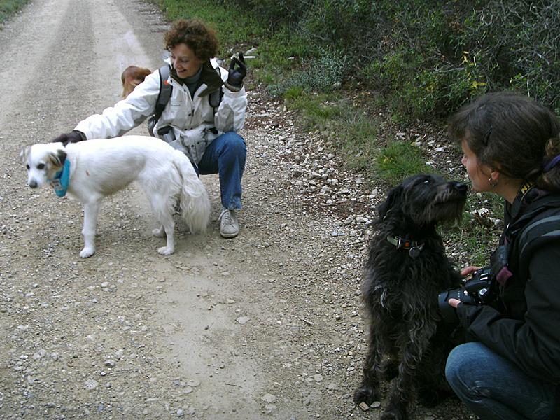 Dogspirit - Balade éducative - Cours collectif - 18 novembre 2012