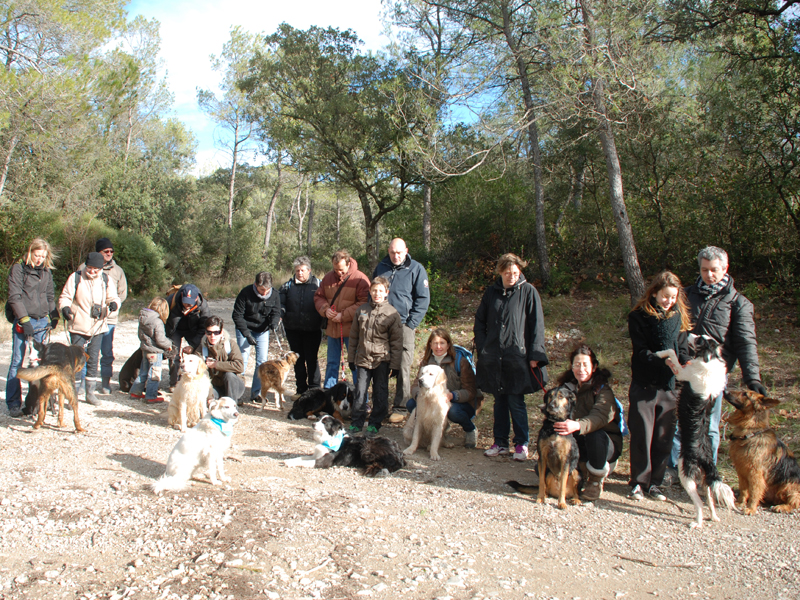 Dogspirit - Balade éducative - Cours collectif - 20 janvier 2013