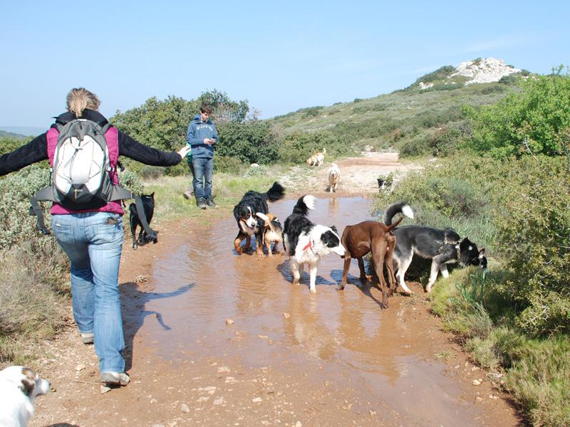 Dogspirit - Balade éducative - Cours collectif - 7 avril 2013