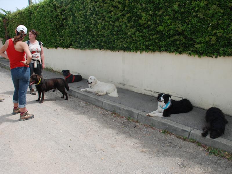 Dogspirit - Balade éducative - Cours collectif - 5 mai 2013