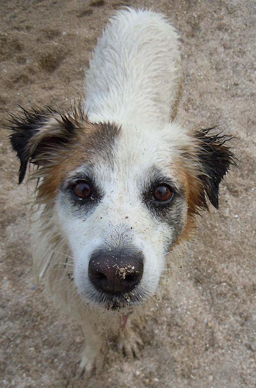 dogspirit_livre_d_or_education_canine_coach_canin_comportementaliste