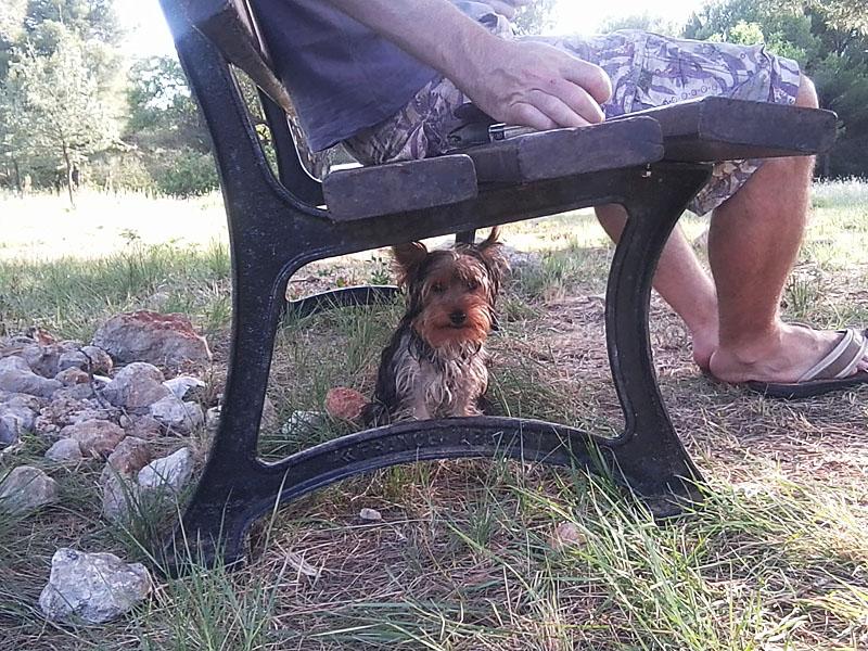 dogspirit_livre_d_or_garde_a_domicile_agreable_chiots
