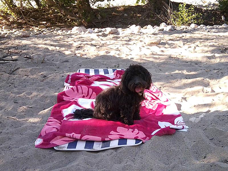 dogspirit_livre_d_or_pension_canine_balades_la_belle_vie