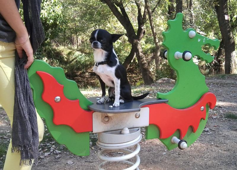 dogspirit_livre_d_or_pension_canine_promenades_balades