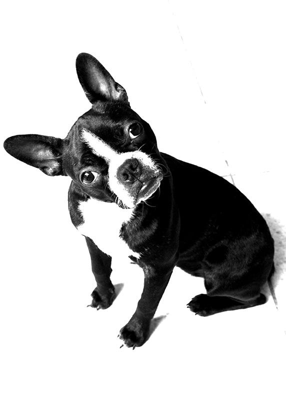 dogspirit_livre_d_or_pension_chien_tranquille_familial