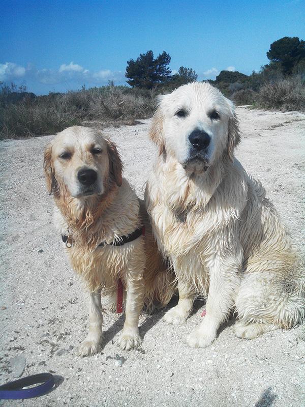 Dogspirit - Livre d'or - Revenir au rappel