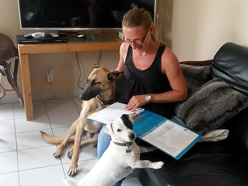 Dogspirit - Méthodes bilan comportemental canin à domicile