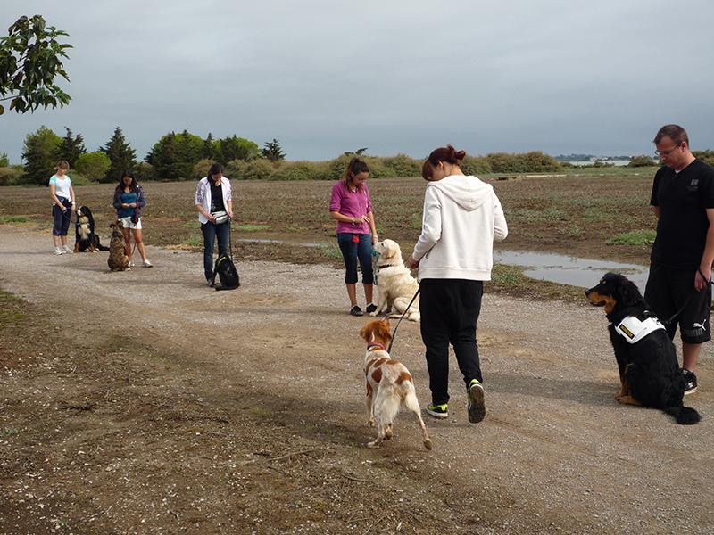 Dogspirit - obéissance, pas bouger, dressage, éducation canine, marche au pied
