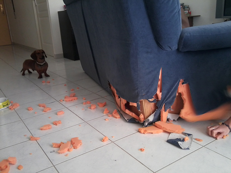Dogspirit - problèmes de destruction, d'agressivite, anxiété de séparation, aboiements
