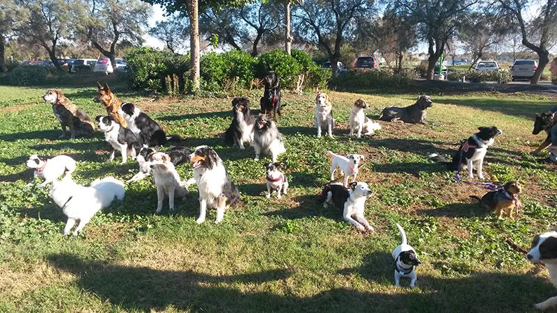 Dogspirit - Sociabilisation du chiot, obéissance, dressage